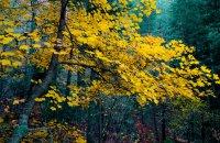 Fraktos Forest, Drama Prefecture, wondergreece.gr