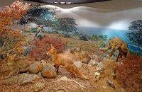 Natural History Museum of Paranesti, Drama Prefecture, wondergreece.gr