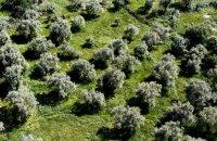 Οlive grove, Lefkada, wondergreece.gr
