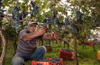 Zoinos Winery, Ioannina Prefecture, wondergreece.gr