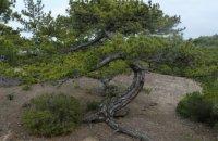 Forest of Pefki, Rodopi Prefecture, wondergreece.gr