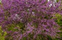Pafsilypo Park, Karditsa Prefecture, wondergreece.gr