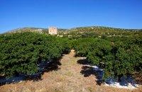 Μα στη Χίο βγαίνει το μαστίχι!  , Άρθρα, wondergreece.gr