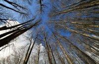 Περπατώ περπατώ μες στο δάσος, Άρθρα, wondergreece.gr