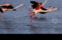 Birdwatching, η ιπτάμενη εκδοχή της ζωής, Άρθρα, wondergreece.gr