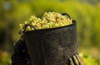 Wine tourism! Wine experience trips, Articles, wondergreece.gr