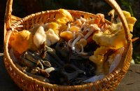 Collecting mushrooms with safety, Articles, wondergreece.gr
